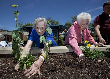 terapia horticultura